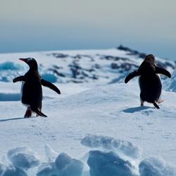 Antarctica - run for it!