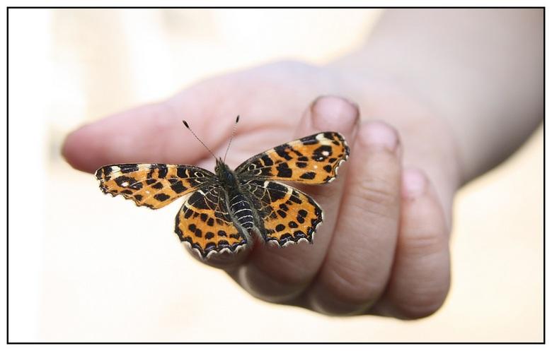 vlinder op de hand - Een mooi landkaartje op de hand van een 3 jarig mannetje.<br /> Jong aangeleerd, respect voor de natuur.