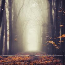 Autumns' gate