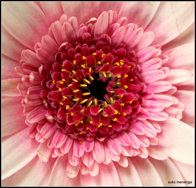 Hart van een bloem - IMG_4505-001.JPG