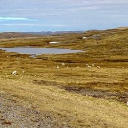 Noors Lapland