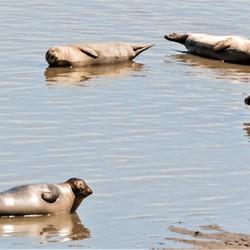 zeehonden aquajogging