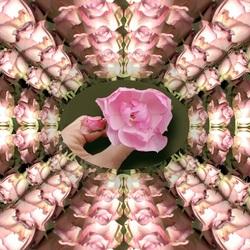 Bewerking: De roos