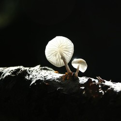 paddestoel in het licht