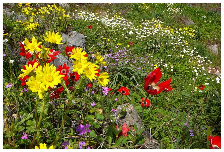 bloemetjestijd - Afgelopen zaterdag klein tochtje gemaakt en op veel plaatsen zie je een zee aan voorjaarsbloemetjes