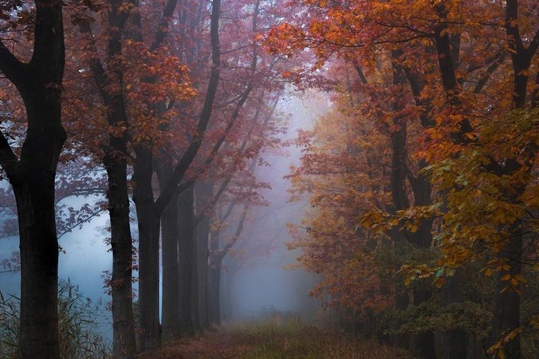 Moody business - Inmiddels hangen er bijna geen bladeren meer aan de bomen, daarom nog even een terugblik naar ruim een maand geleden toen de herfsttr
