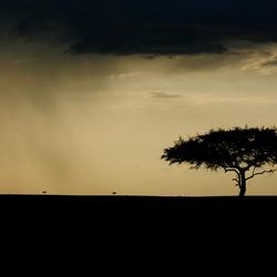 Masai Mara poëzie...