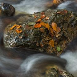 herfst bij de Hoegne