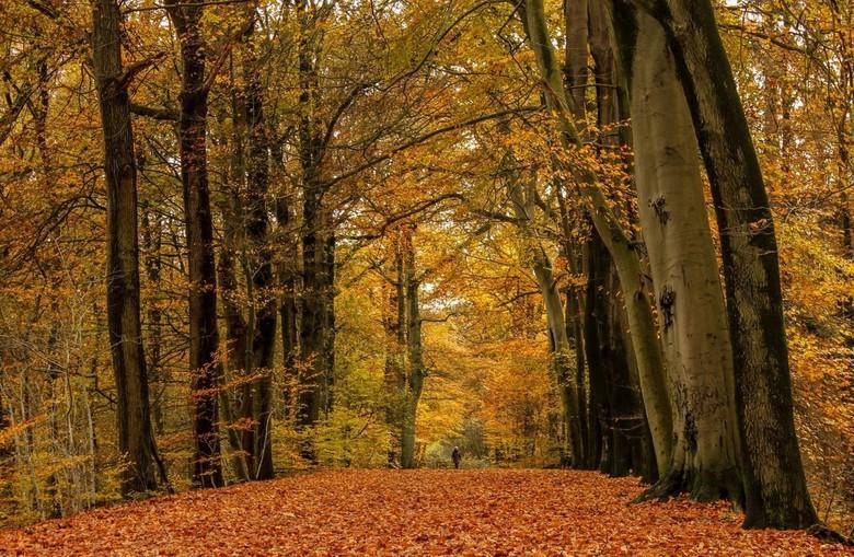 wandeling - genieten in een kleurrijk herfstbos<br /> <br /> gr.Joke