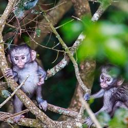 Monkeyland in Zuid Afrika