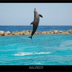 Dolphin V