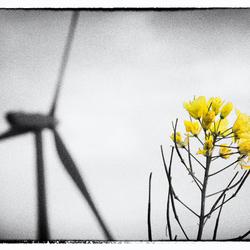 Blowin' Windmill