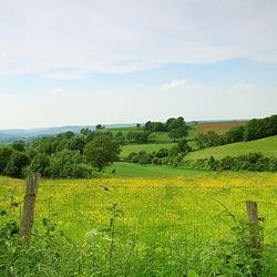 zicht over de Limburgse heuvels