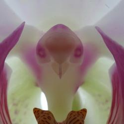 Like a bird .....