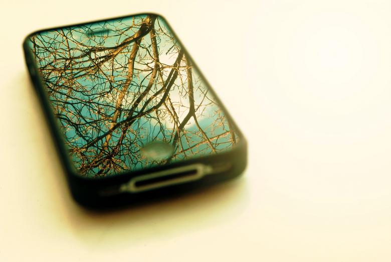 Apple tree - ©frata60