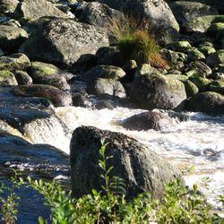 Closup rivier1