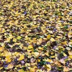 Herfstkleuren 2
