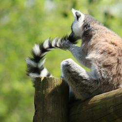 Mmmwoah! I love my tail...