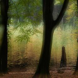 Mystery wood