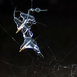 spinnenweb in de ijzel