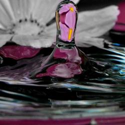 bloem in druppel