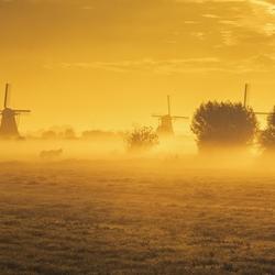 Golden morning in Kinderdijk