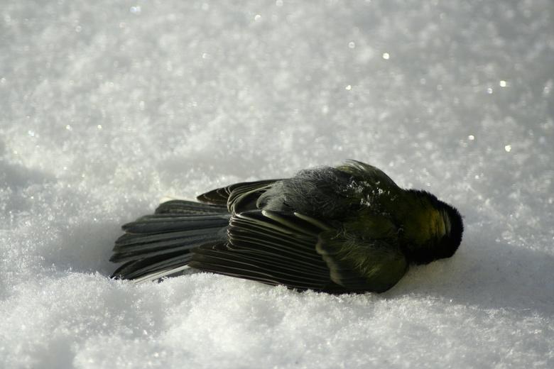 Bevroren schoonheid - Tijdens onze vakantie in Tsjechië werd het 's nachts -25 graden C en overdag -14 C... Ondanks alle opgehangen voer was dat