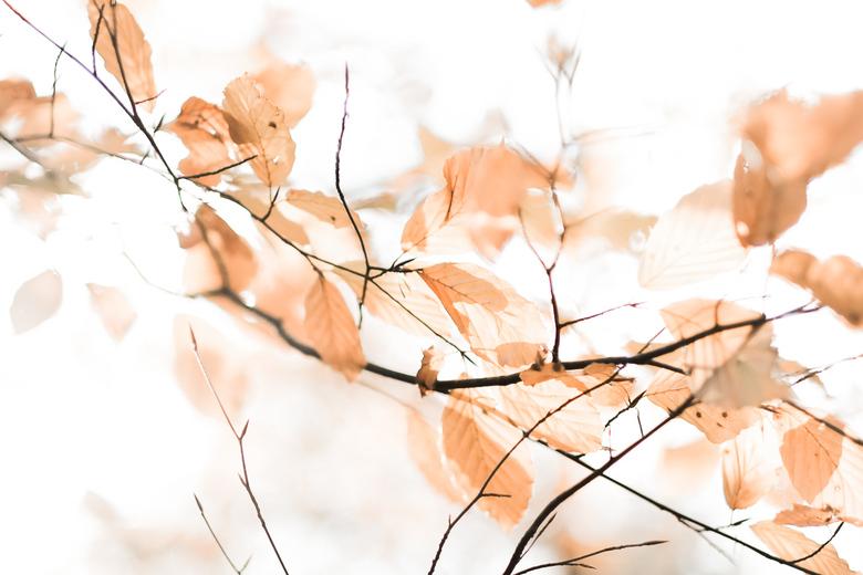 Vaarwel herfst -