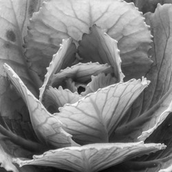 mystic black and white flower