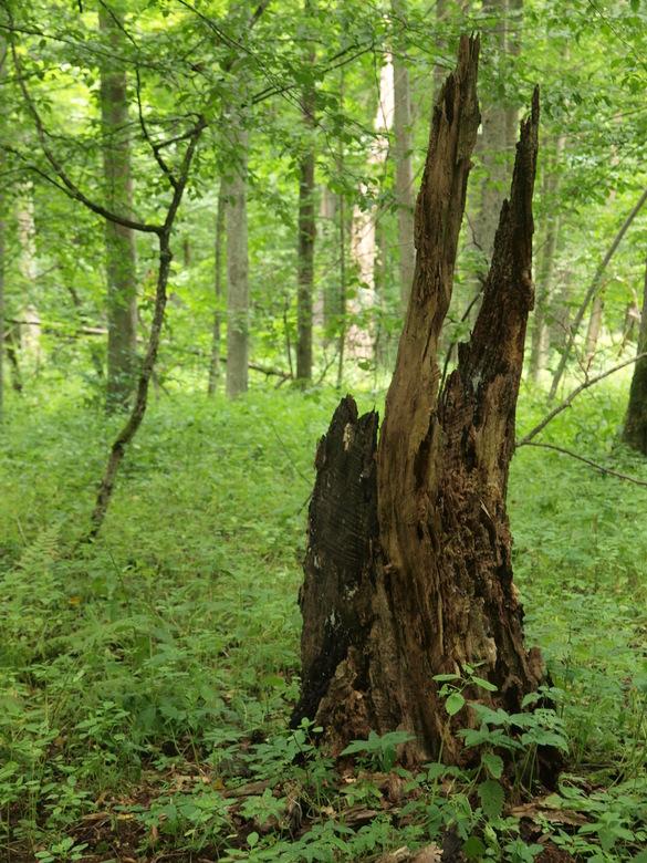 In het oerbos