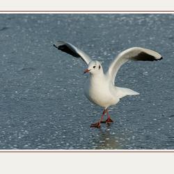 Dancing on ice  ......