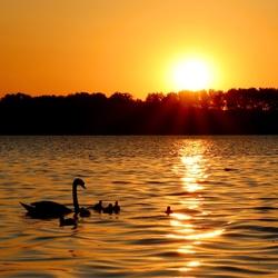 Zwanen en ondergaande zon