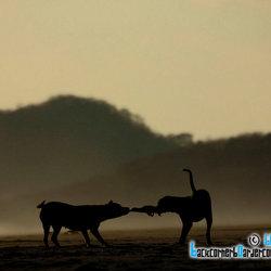 Varken & Hond vechten om topje