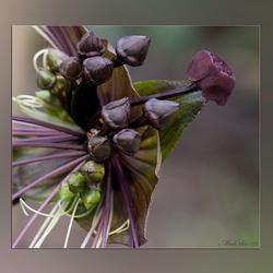 Gothic Flower