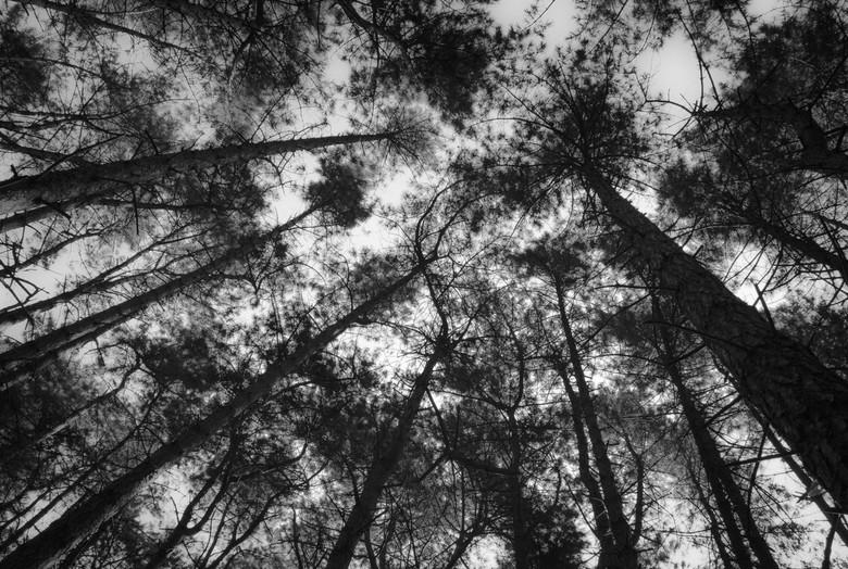 Stilte  - De natuur biedt rust en stilte.
