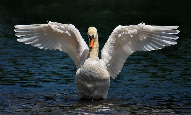 Zwanenmeer - Een zwaan in een meer en ballet.....<br /> Fijn weekend, Djurre