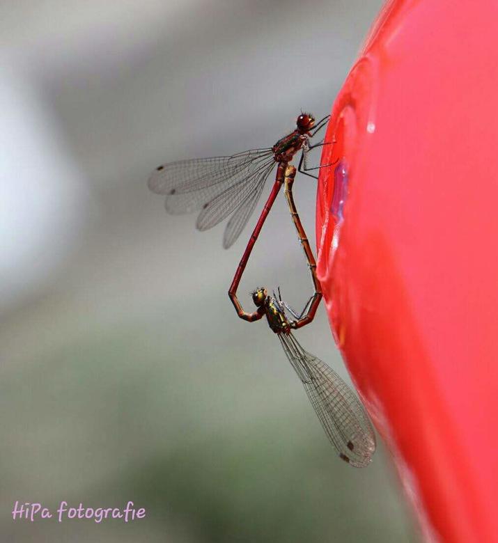 Love bug -