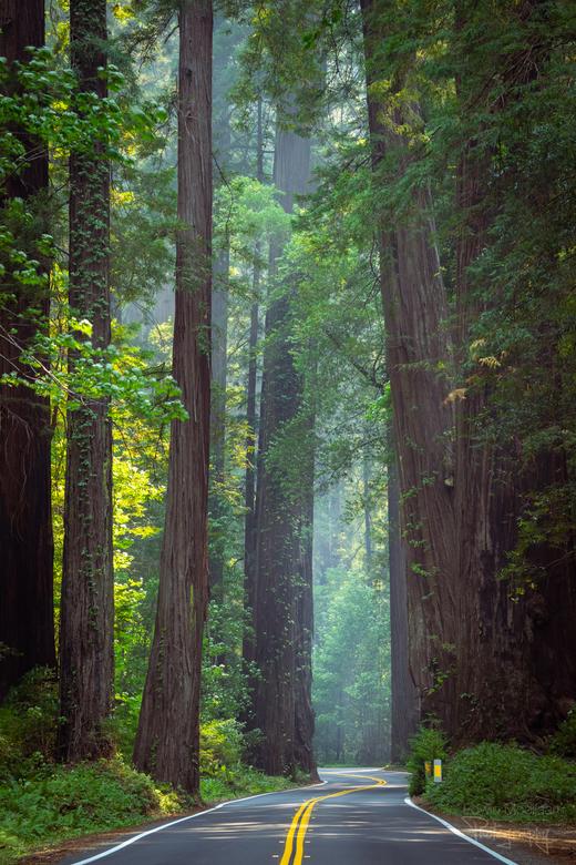 Avenue of the Giants - Een mooi pad door de machtige Redwoods. <br /> Veel van de Redwoods worden makkelijk 100 meter hoog.
