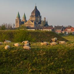 Grazende schapen bij een opkomende lentezon