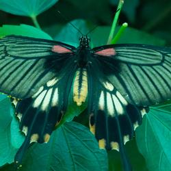 Tropische vlinder 2
