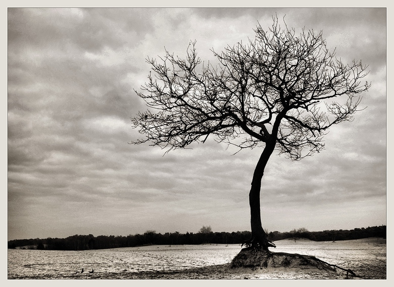 eenzaam boompje -