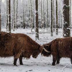 Stoeien in de sneeuw