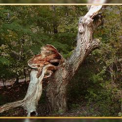 Impressie van een dode boom