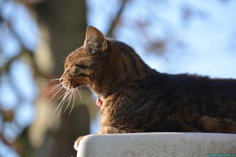 Neelix de kat. - Neelix de kat, gapende op het dak van de Neelix-Tower op bijna 3 meter hoogte.