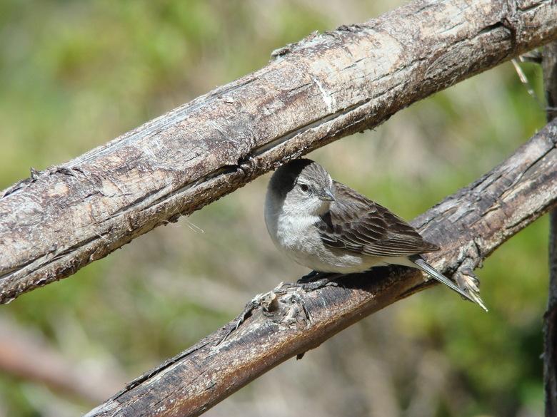 Vogeltje in de zon - isla del sol bolivia