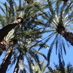 palmen in de blauwe lucht