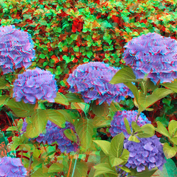 Flowers 3D anaglyph