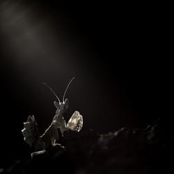 licht uit....spot áán