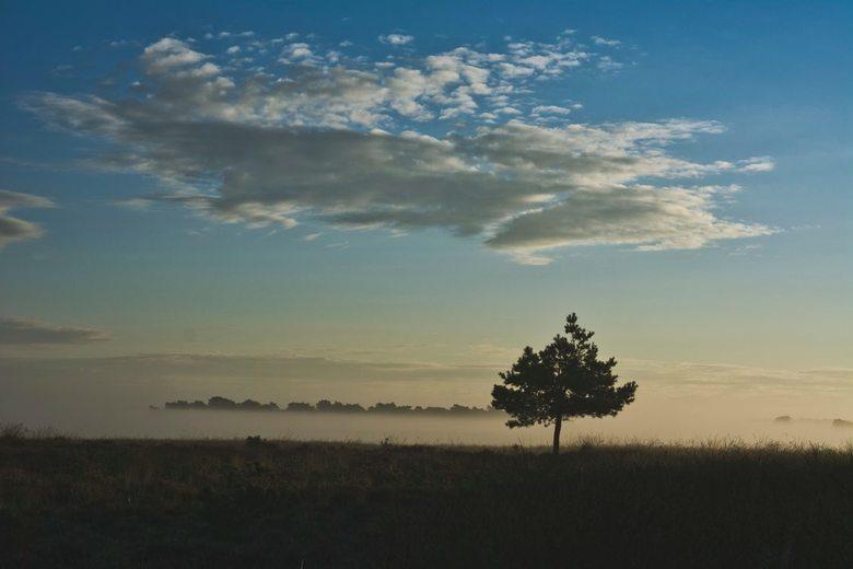 Zonsopgang deelerwoud - Zonsopgang op het deelerwoud