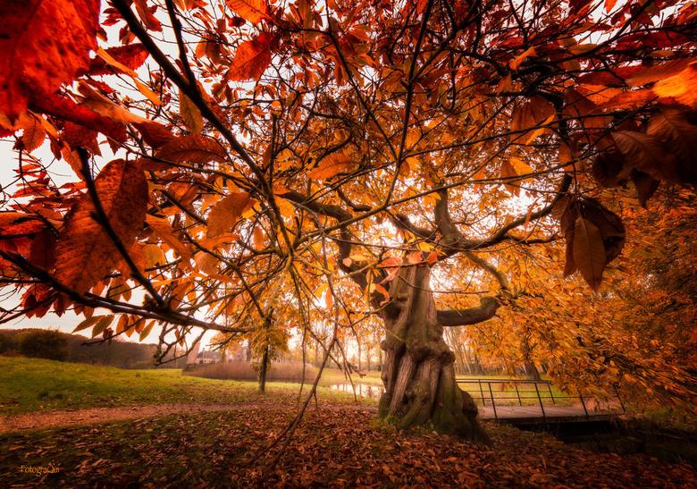 On your knee in front of The tree - Het was weer goed toeven, deze zondagmorgen...